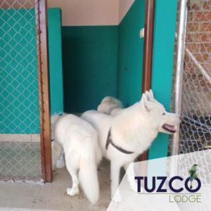 Tuzco Pet Hotel